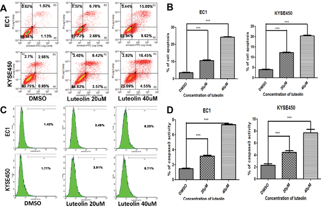 The effect of luteolin on cell apoptosis and caspase-3 activation were investigated by flow cytometry.