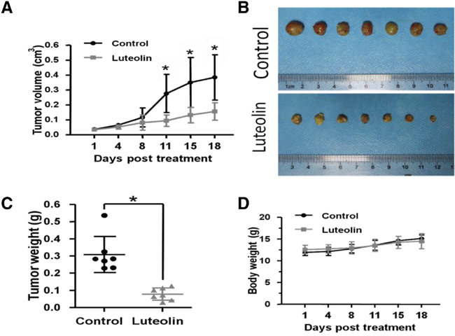 Luteolin inhibited tumor growth in ESCC xenograft mouse models.