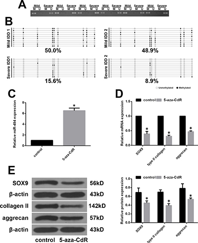 MiR-494 expression is regulated by promoter methylation status.