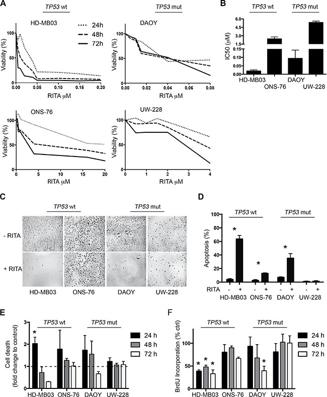 RITA treatment reduces cell viability and increases apoptosis in medulloblastoma cell lines with and without TP53 mutations.