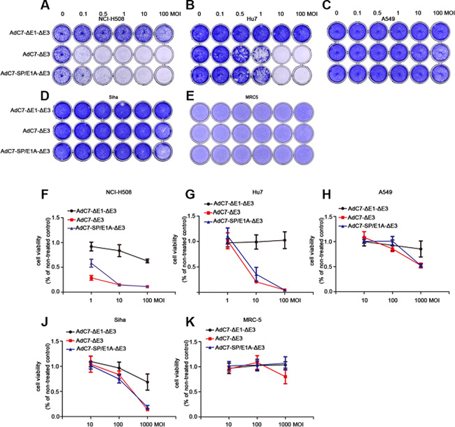 AdC7-ΔE1-ΔE3 induced cytotoxicity of tumor cells.