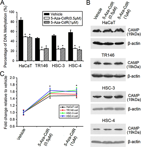 Induction of human CAMP expression by 5-Aza-CdR treatment.