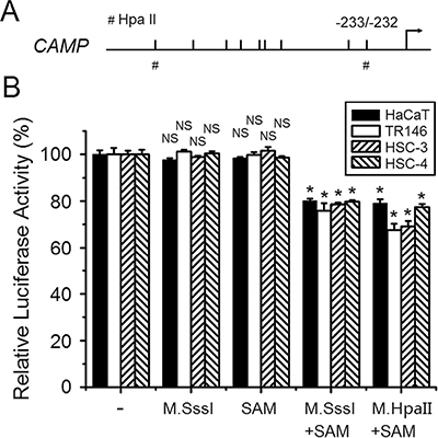 Direct downregulation of human CAMP promoter activity by DNA methylation.
