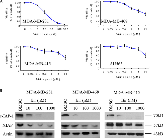 Birinapant inhibits the expression of IAPs in breast cancer cells.