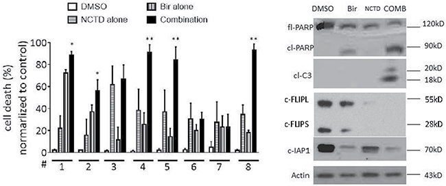 NCTD enhances Birinapant-mediated cell death induction in primary breast cancer cells.