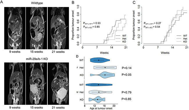 No effect of miR-29a on tumour onset in a pancreatic cancer model.