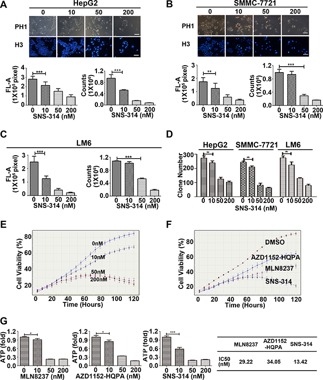 The growth-suppressive effect of inhibitors of Aurora kinases on HCC cells.