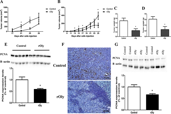 Recombinant ostreolysin (rOly) delays tumour growth and reduces tumour weight in mice.