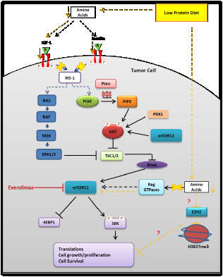 Representative schema of the potential molecular mechanisms responsible for the biological effects of protein restriction.