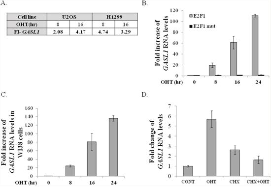 Ectopic E2F1 upregulates GASL1 RNA levels.