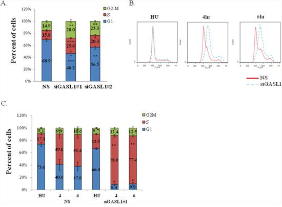 Silencing of GASL1 enhances G1 exit.