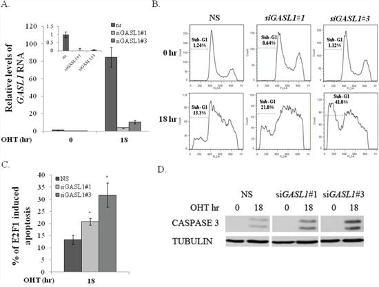 GASL1 silencing promotes E2F1-induced apoptosis.