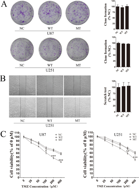 IDH1 R132H mutation increases chemosensitivity to TMZ.