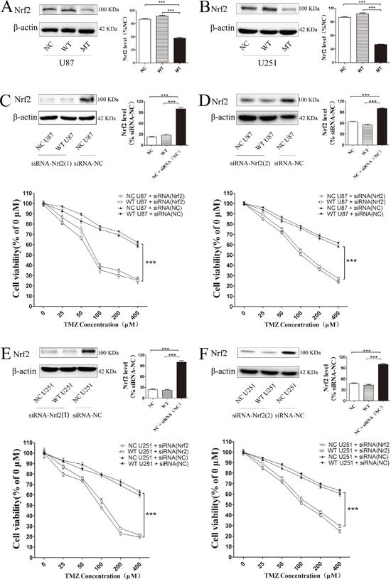 Decreasing Nrf2 expression in IDH1 R132H cells could increase TMZ sensitivity.