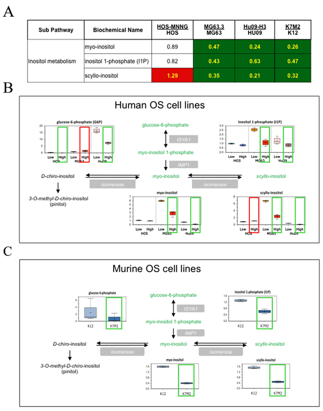 Inositol pathway metabolites are statistically altered in highly metastatic OS cells compared to their low metastatic parental cells.