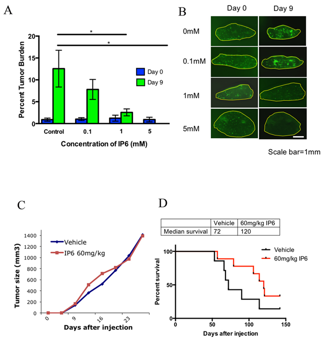 Dysreglating the inositol pathway with IP6 in highly metastatic cells inhibits their ability to colonize in lung tissue in the PuMA model and alters metastatic progression in a spontaneous metastasis model.