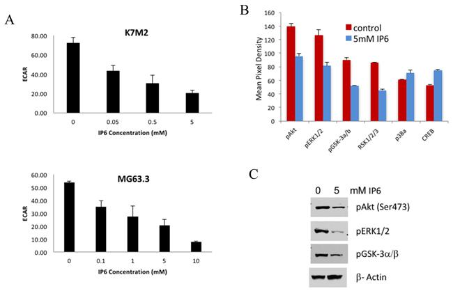 IP6 treatment suppresses PI3K/Akt pathway and glucose metabolism.