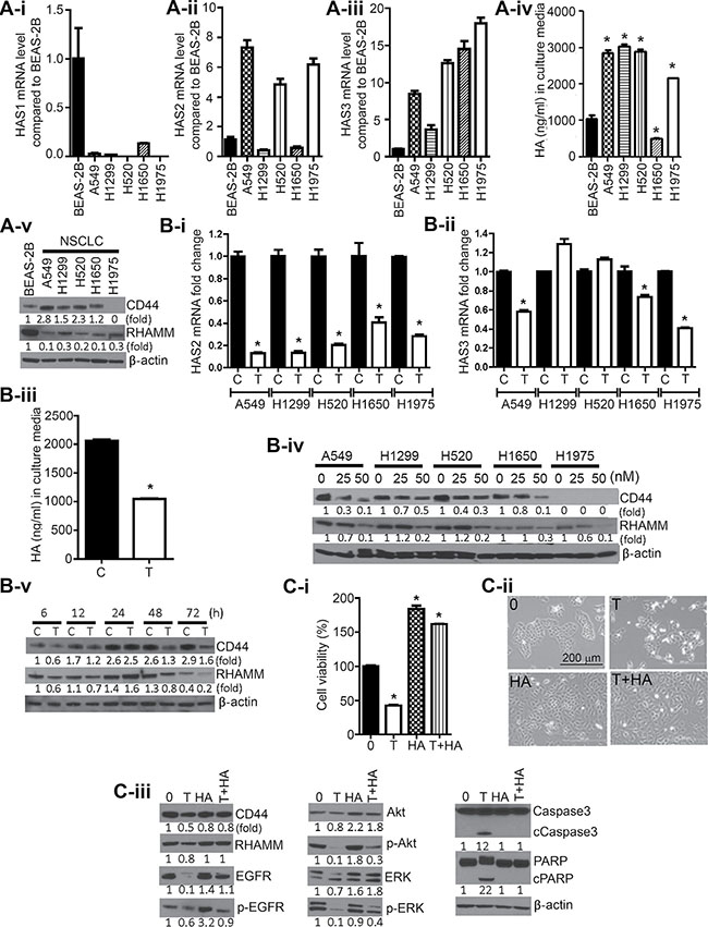 Triptolide suppressed levels of HASs, CD44, and RHAMM, and HA in NSCLC cells and exogenous HA conferred protection against the anti-proliferative and pro-apoptotic effects of triptolide.