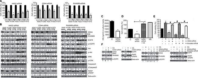 siRNA-mediated silencing of HAS2, CD44 or RHAMM reduced NSCLC cell viability and the level of cell proliferation- and apoptosis-related proteins and these effects were modulated by exogenous HA.