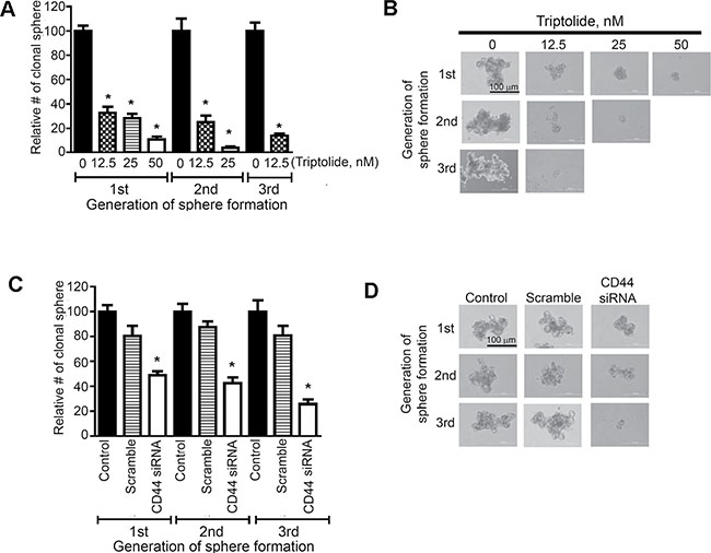 Triptolide and CD44 siRNA reduced the proliferation and self-renewal of putative lung cancer stem cells expressing CD44.