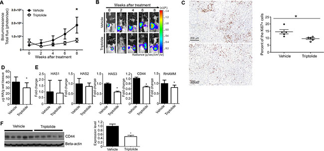 Liposomal triptolide significantly reduced the growth of orthotopic lung tumor in nude rats.