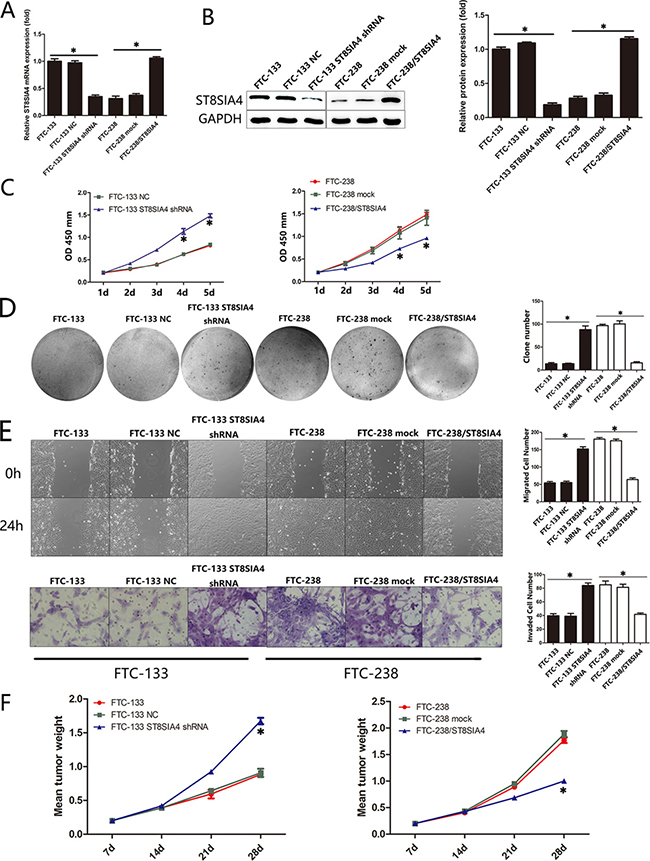 ST8SIA4 mediates the proliferation, migration and invasion of FTC cells both in vitro and in vivo.