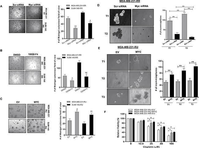Myc expression contributes to cancer stem-like features in TNBC cell subsets.