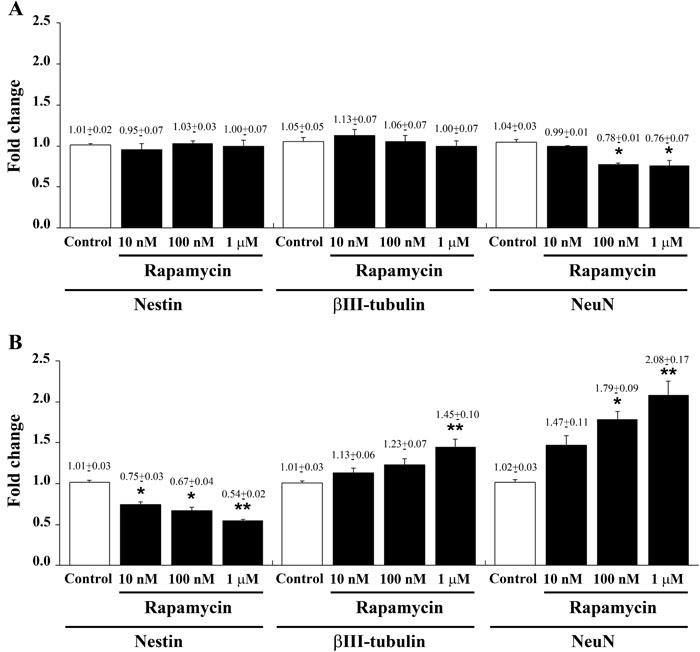 Rapamycin dose-dependently reduces nestin while increasing βIII-tubulin and NeuN mRNAs.