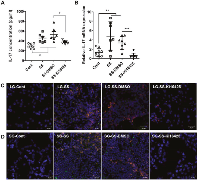 Ki16425 treatment reduced IL-17 expression in an adoptive transfer SS model.