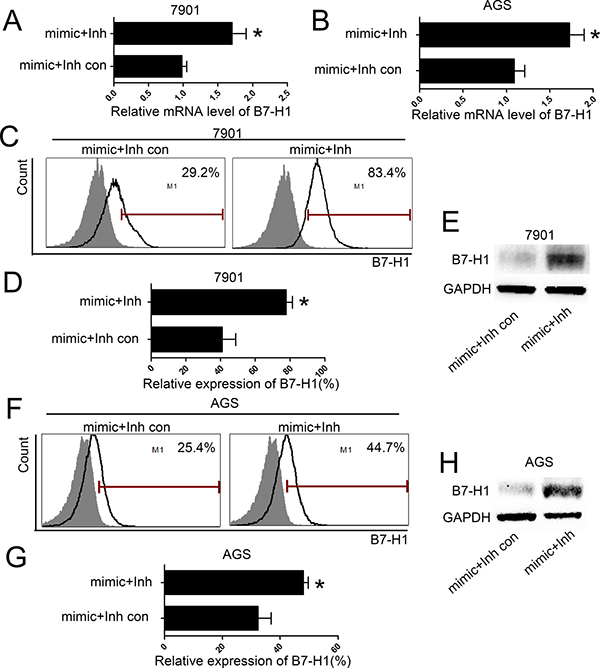 inhibition of miR-152 increased level of B7-H1 in gastric cancer cells.
