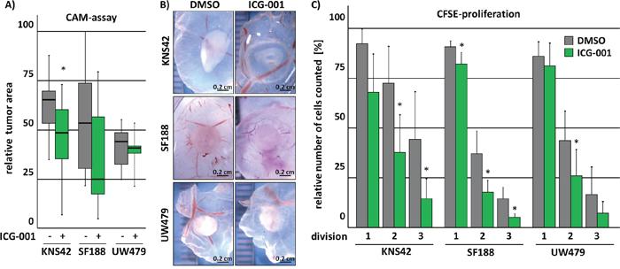ICG-001 inhibits tumor growth in vivo.