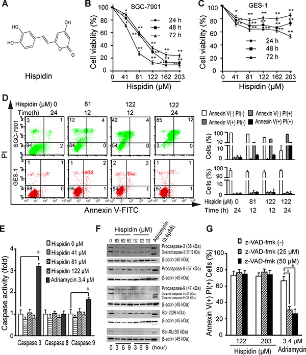 Hispidin induces caspase-independent cell death in SGC-7901 cells.
