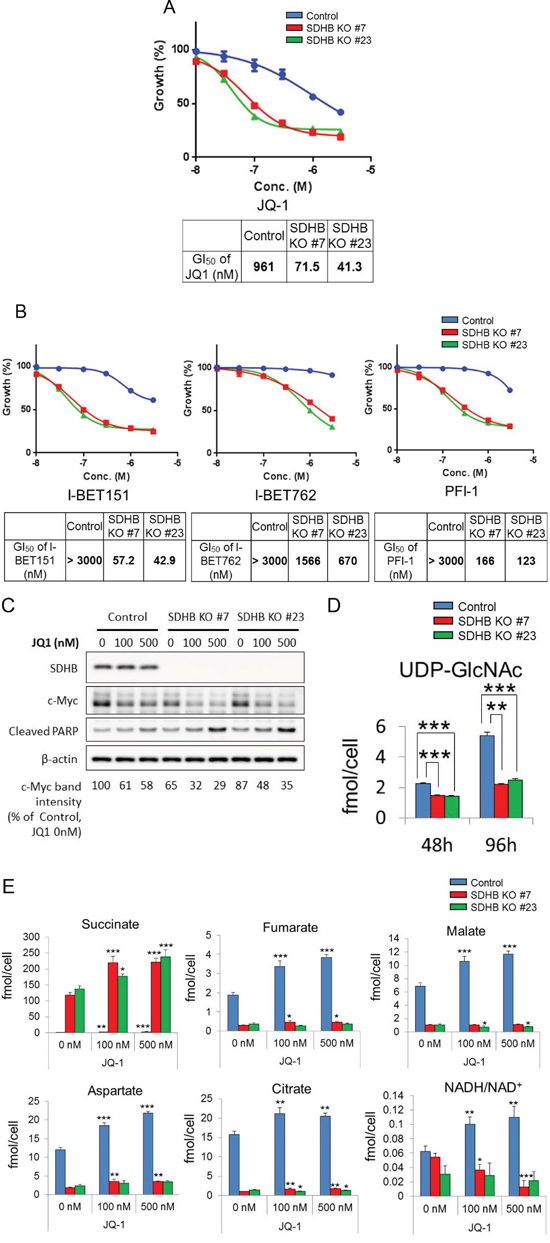 Specific growth inhibition of SDHB-deficient cells by BET inhibition.