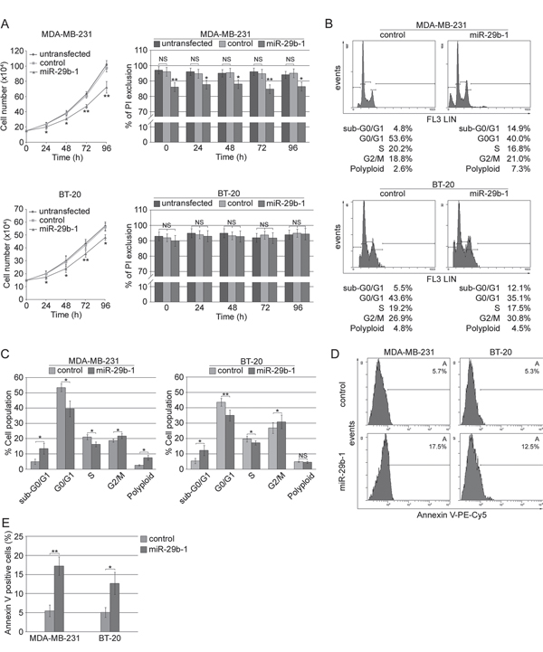Effect of ectopic expression of miR-29b-1 on cell growth, viability, cell cycle distribution and apoptosis in MDA-MB-231 and BT-20 cell lines.