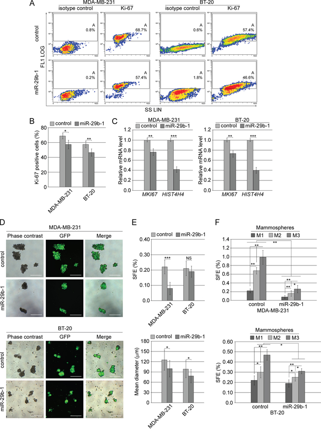 Effect of miR-29b-1 overexpression on cell proliferation markers and self-renewal in MDA-MB-231 and BT-20 cell lines.