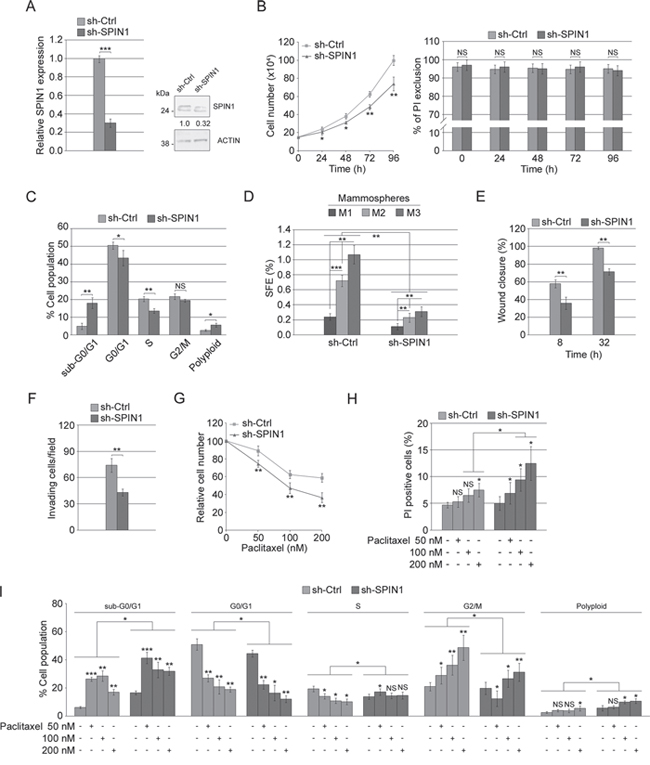 Effect of SPIN1 silencing in MDA-MB-231 cells.