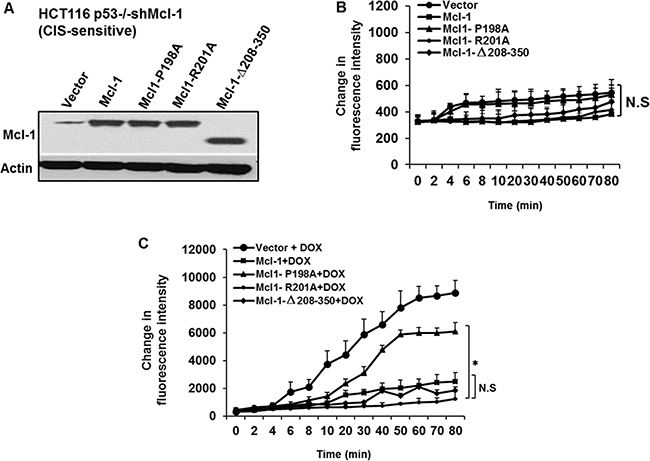 The Mcl-1 P198A residue required for inhibition of chemotherapy-induced ROS generation.