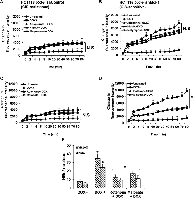 Mcl-1 acts to suppress mitochondrial ROS production thereby inhibiting CIS.