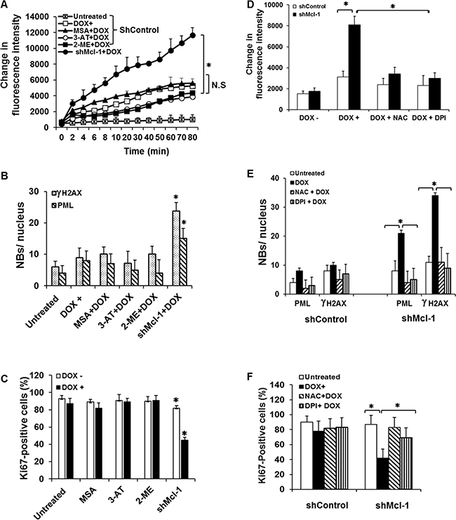 Mcl-1 does not inhibit CIS through up-regulation of anti-oxidant molecules.