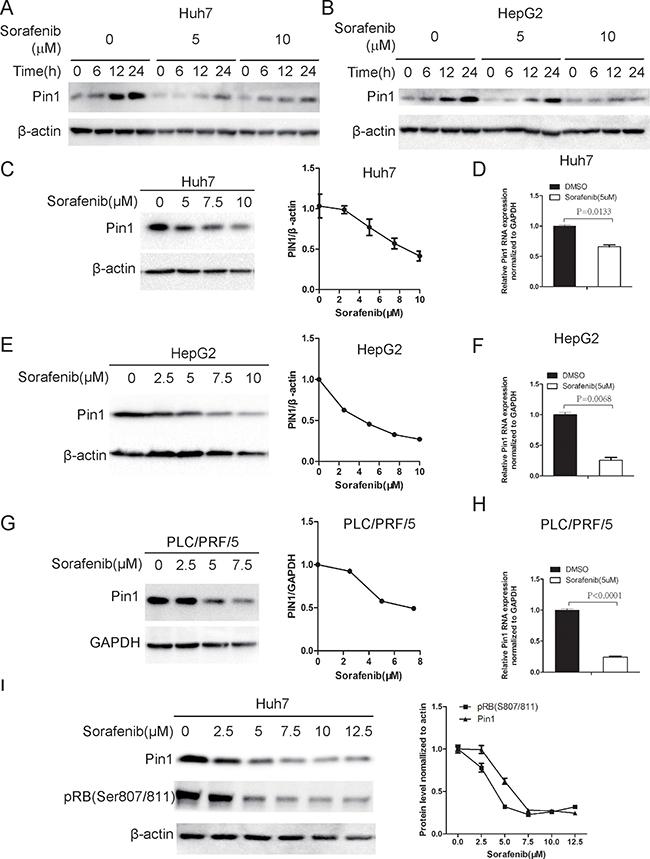 Sorafenib down-regulates Pin1 mRNA and protein expression.