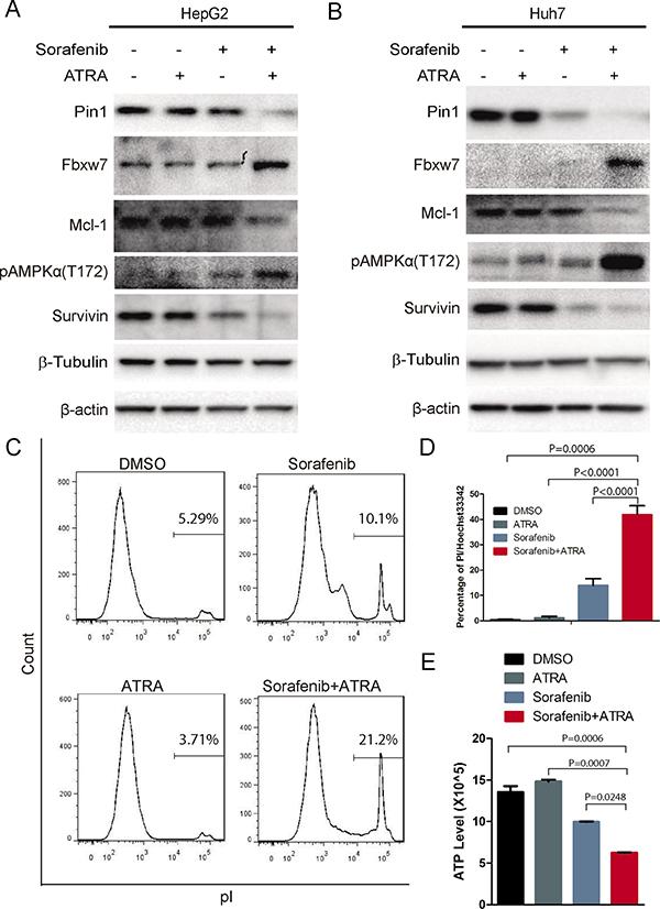 The Pin1 inhibitor ATRA sensitizes HCC cells to sorafenib-induced cell death.
