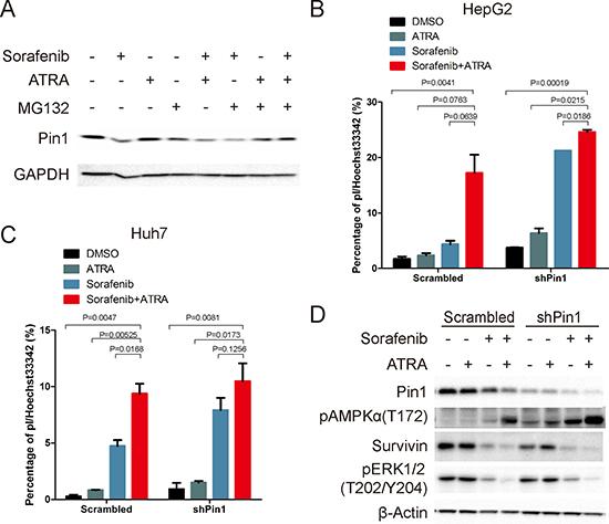 Sorafenib and ATRA synergistically induce cell death through down-regulating Pin1.