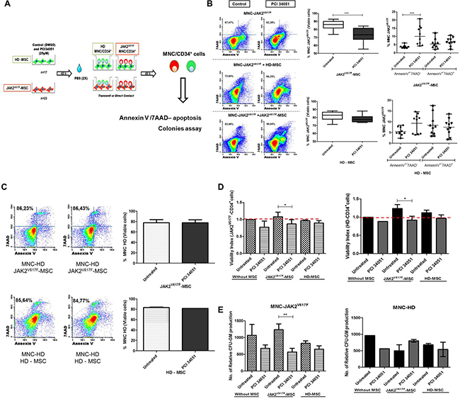 The HDAC8i in the BM-MSC from JAK2 patients decrease the capacity to maintain the neoplastic MNC/HPC.