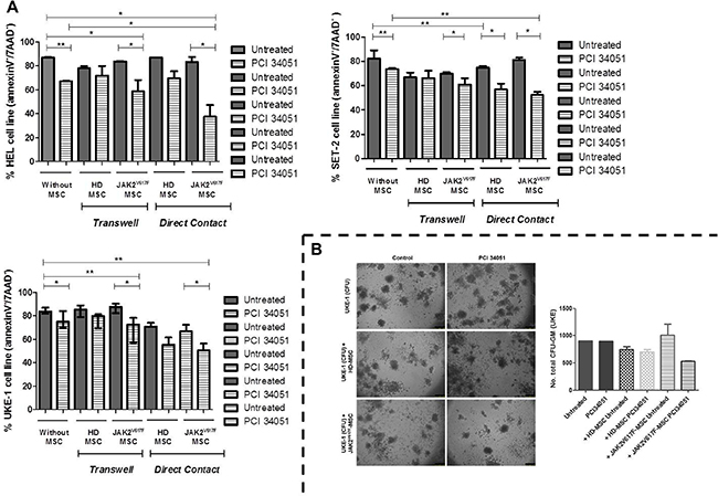 The treatment with PCI34051 induces apoptosis and decreases the colony capacity of MPN cell lines in the presence of MPN-MSC.