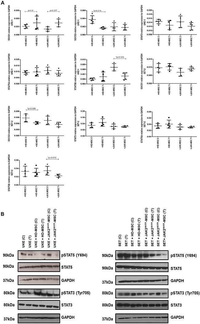 PCI34051changes the expression of crucial signaling pathways in MPN cell lines in presence of neoplastic stroma.