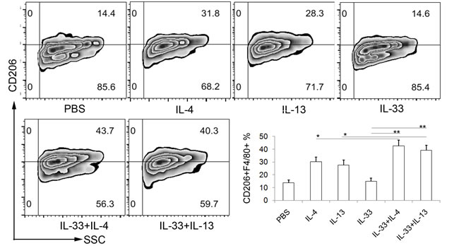 IL-33 indirectly promotes AAM development