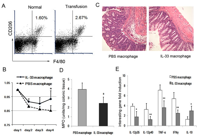 Introperitoneal infusion of IL-33-induced AAM attenuates the development of colitis.