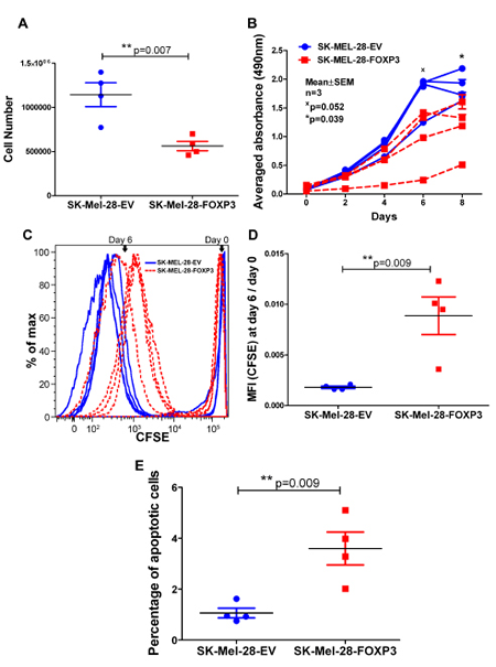 Effect of FOXP3 over-expression in SK-MEL-28 cells on melanoma cell proliferation and apoptosis.
