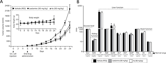Amino group containing active derivative 4a of abietic acid inhibits melanoma tumor development with negligible toxicity.