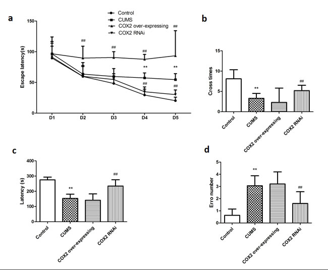 The effects of COX2 expression status on learning and memory of CUMS-treated rats based on the MWM task and the step-down-type passive avoidance test.